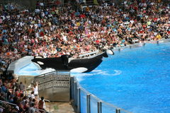 Sea world, Orlando , Florida Stock Photo