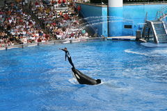 Sea world, Orlando , Florida Royalty Free Stock Photography