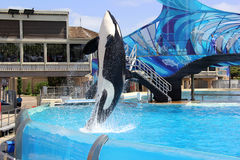 Sea World, San Diego Stock Image