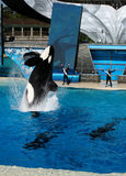 Sea World San Diego - Shamu Believe Show Stock Photo