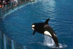 Sea World show Stock Image
