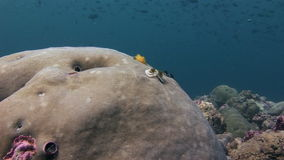 Sea worms on corals underwater in sea of Maldives. stock footage