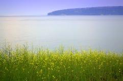 Calm sea yellow flowers Stock Photo