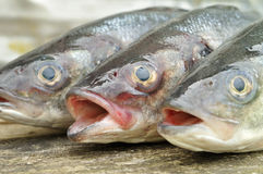 Seabass. Fish on the wooden background royalty free stock image