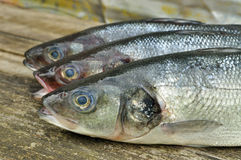 Seabass. Fish on the wooden background stock photos