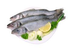 Seabass. Fresh fish food with onions and lemon Stock Photos