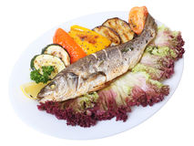 Seabass Stock Photography