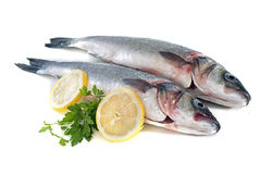 Seabass Royalty Free Stock Images