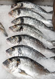 Seabass on cooled market display Stock Image