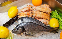Seabass on cooled market display Royalty Free Stock Photo