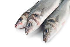 Seabass (Dicentrarchus labrax) on white Stock Photos
