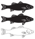 seabass Royalty Free Stock Photography
