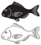 Seabass. The figure shows fish seabass Stock Photo
