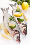 Seabass fish with hebs, limes and lemons Stock Photography