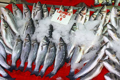 Seabass fish in ice on a market stall Stock Photography