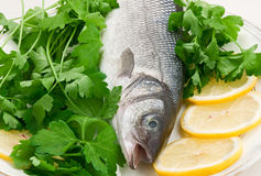 Seabass Fish On A Plate. Seabass fish on a white plate on a white background Royalty Free Stock Photography