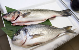 Seabass and gilthead bream Royalty Free Stock Images