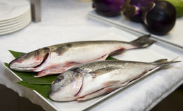 Seabass and gilthead bream prepared for cooking Stock Photography