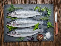 Seabass on a graphite board with spices and herbs. Royalty Free Stock Photography