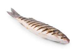 Seabass grilled Royalty Free Stock Image