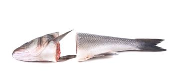 Seabass head and tail close up. Royalty Free Stock Image