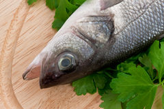 Seabass with herbs on the Cutting Board. Lovely fresh sea bass with herbs on the wooden Cutting Board Royalty Free Stock Images