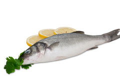 Seabass with herbs and lemon. Lovely fresh sea bass with herbs isolated Stock Image