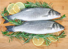 Seabass with lemon and rosemary Stock Images