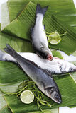 Seabass, loup de mer (Dicentrarchus labrax) on banana leaves Royalty Free Stock Images