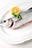 Seabass  on  plate,ready to cook Stock Photos