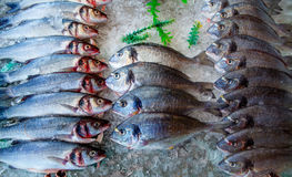 Seabass and sea bream over ice. Raw fresh seafood fishes Royalty Free Stock Photos
