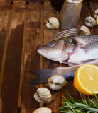 Seabass Royalty Free Stock Image