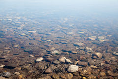 Seabed Stock Photos