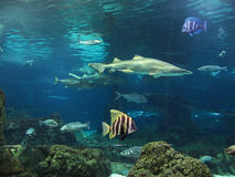 Seabed Stock Images