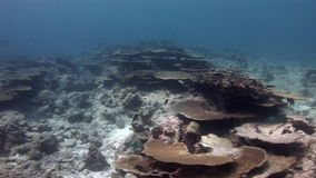 Seabed on background corals underwater in sea of Maldives. stock video footage