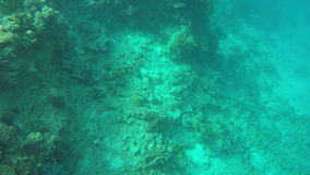 The seabed in the clear water.  stock video footage