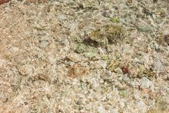 The seabed close up. Small stones and corals visible through seawater stock images