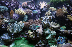 Seabed and corral reefs Stock Photo