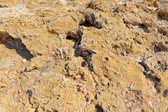 Seabed during the ebb tide period. Close-up view to dried seabed during the ebb tide period at Cyprus coast Royalty Free Stock Photography