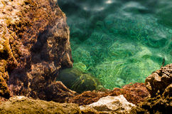 Seabed with green alga and stones Stock Photo