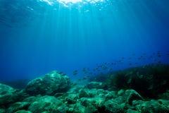 Seabed in the Mediterranea Sea. Underwater scene of seabed in the Mediterranea Sea stock photo