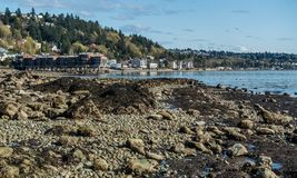 Seabed Revealed 2. A rocky seabed is revealed at low tide in West Seattle, Washington Royalty Free Stock Photos