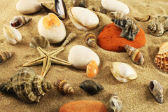 Seabed, sand, seashells Royalty Free Stock Photo