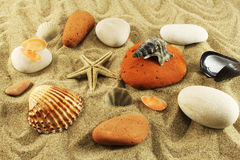 Seabed, sand, stones, seashells Royalty Free Stock Images