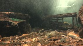 Seabed, Sea Floor, Bottom of Ocean, Underwater. Stock video of a sea bed stock footage