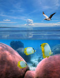 Seabed and sky Royalty Free Stock Images
