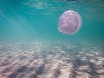Seabed, sunlight, sand, with jellyfish. Corneroth in the background Royalty Free Stock Images