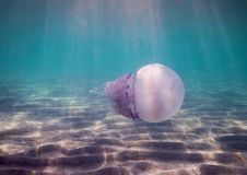 Seabed, sunlight, sand, with jellyfish. Corneroth in the background Royalty Free Stock Image