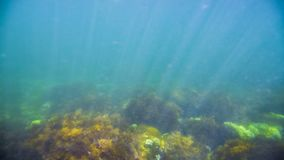 The seabed under the water. Marine life under water. Plankton swims near rocks with overgrown seaweed stock video footage