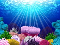 Seabed where there coral and shells Stock Images